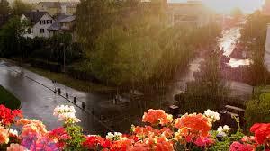 nature beautiful rainy 1920x1080px