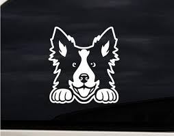 Border Collie Dog Decal Sticker Car Bumper Window Laptop Etsy