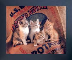 Gunnie Sack Cute Kittens Funny Cat Kids Room Animal Wall Espresso Framed Picture Art Print 20x24 Impact Posters Gallery