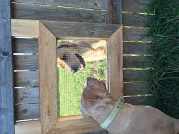 I Built A Window In My Fence So My Dogs Can Visit With The Neighbors Dogs Aww