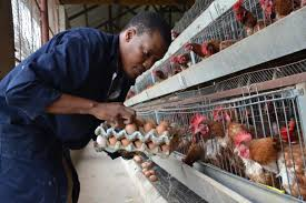 Chicken and the Egg: Africa Lead Helps Youth Entrepreneur Prepare for  Investment and Expansion – Africa Lead