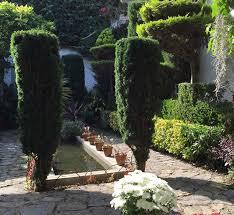 columnar evergreens fastigiate or