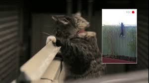 The Oscillot Cat Fence Cats Can T Get Over It Youtube