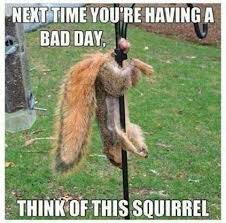Squirrel Hung By The Balls Imgur