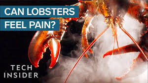 Why Do We Boil Lobsters Alive? - YouTube