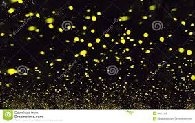 Firefly Stock Photo Image Of Relaxing Evening Wallpaper 99577258