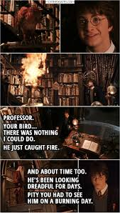 your bird there was nothing i could do scattered quotes