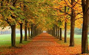 fall nature wallpaper autumn leaves
