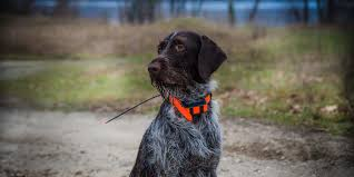 25 Best Dog Gps Collar Trackers And Cheap Alternatives 2019
