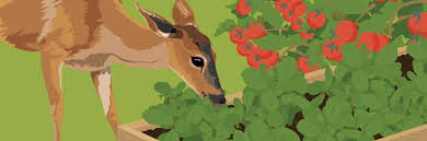 how to keep deer and other animals out