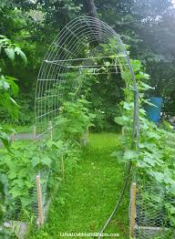 diy arched cattle panel garden trellis