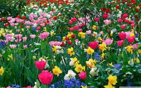 curiozități despre flori florile