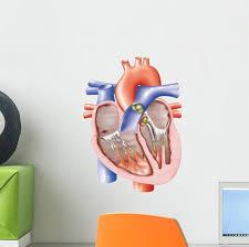 Anatomical Heart Wall Decal Wallmonkeys Com