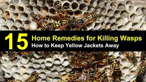 how to keep yellow jackets away from