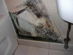 mold on wallpaper 427l29x jpg