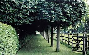 Trees Clipped Hedges And Post And Rail Fence Landscape Garden Canopy Landscape Design