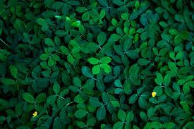 Fondo de hojas verdes en luz oscura concepto de imagen ecológica ...