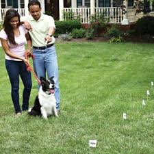 How To Find The Right Containment System For You In 5 Minutes Petsafe Articles