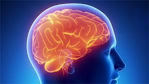 Питание для мозга. Топ-15 самых полезных продуктов