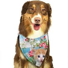 Yutess Adorable Orange Kitten Standing Grass With White Fence Dog Cat Bandana Triangle Bibs Scarf Pet Kerchief Neckerchief Set For Small To Big Dog Cats Personalized Amazon Co Uk Kitchen Home