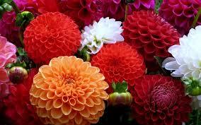 صور زهور جميله جدا