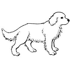 Golden Retriever Puppy Kleurplaat Gratis Kleurplaten Printen