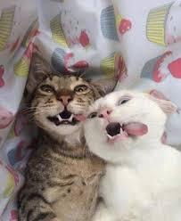 Thích thú khoảnh khắc 'xấu hổ muốn độn thổ' của loài mèo - Báo ...