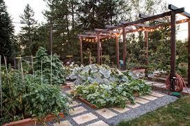 growing a vegetable garden in your backyard