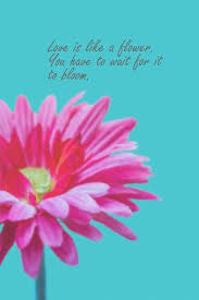 love quotes on pink gerbera flower background stock photo picture