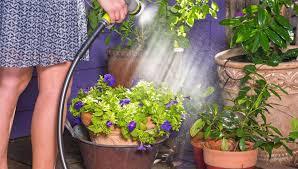 watering tips when to water gardener