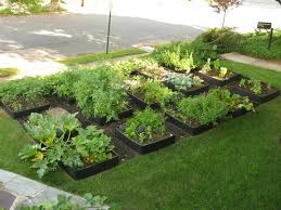 front lawns into beautiful vegetable