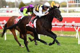 Geelong Cup day preview and tips