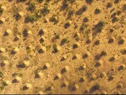 Get Termite Dirt Mounds Gif