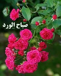 اجمل الورود مع صباح الخير