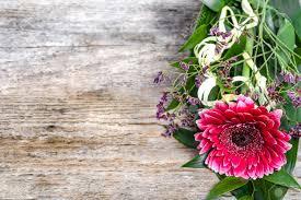 Flor De Gerbera Fondo Para El 8 De Marzo Dia De La Mujer Dia