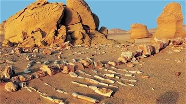 """نتيجة بحث الصور عن محمية طبيعية في مصر"""""""