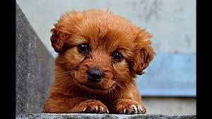 صور كلاب صور كلاب جميلة Youtube