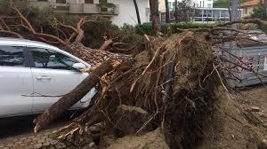 Il maltempo flagella la costa, numerosi pini abbattuti a Milano ...