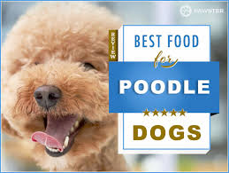 feed your and puppy poodle