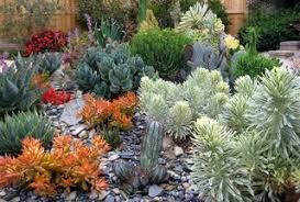 succulent garden ideas photos