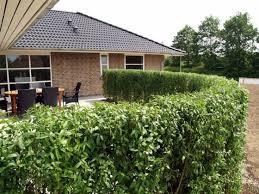 Hedge Plants Stylish Living Fence Interior Design Ideas Avso Org
