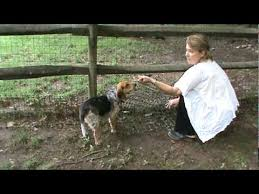 How To Stop A Dog From Digging Under A Fence Dog Proof Fence