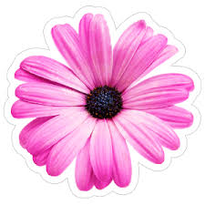 Daisy Flower Car Stickers Decals Over 3 Dozen Designs