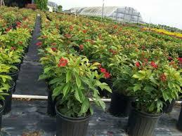 landscape garden service in dubai