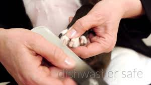 no more clipping file your dog s nails