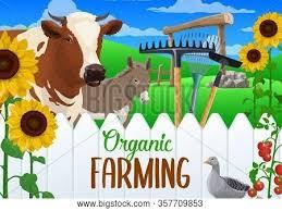 Farm Animal Vegetable Vector Photo Free Trial Bigstock