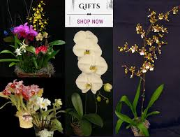orchids by hausermann front