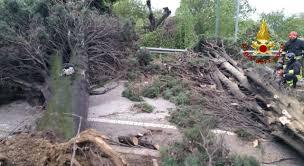 Pioggia, vento e alberi caduti: maltempo in Veneto - Il Mattino di ...