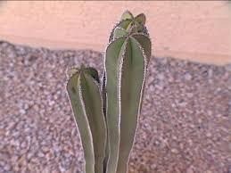 Desert Plants Diy