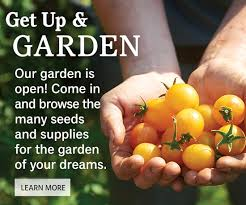 bur seeds and plants home garden